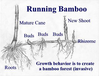 Be Like Bamboo Systems for your Business Foundation