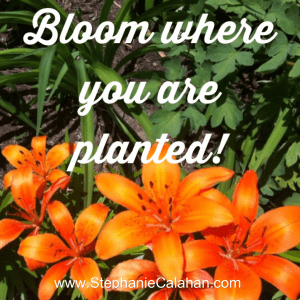 Take Action Now - Bloom Where You Are Planted
